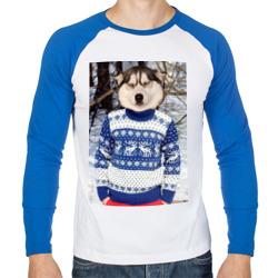 Хаски в свитере
