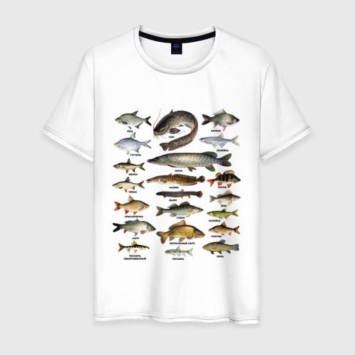 Мужская футболка хлопок Популярные виды рыб