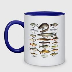 Популярные виды рыб - интернет магазин Futbolkaa.ru