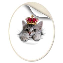 Pretty kitten - интернет магазин Futbolkaa.ru