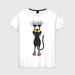 Висящий кот