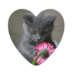 Магнит виниловый сердцеКотенок с цветком
