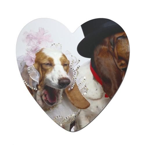 Свадебные собаки