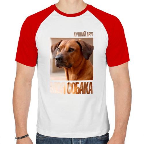 Мужская футболка реглан  Фото 01, Родезийский риджбек