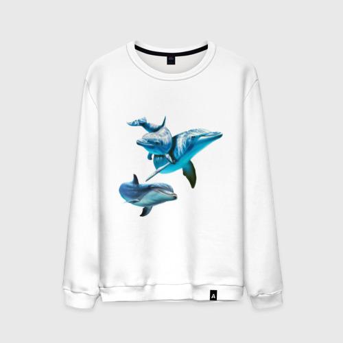 Мужской свитшот хлопок Дельфины