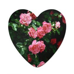 Любовь к цветам