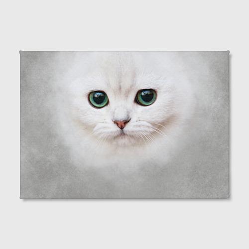 Холст прямоугольный Белый котик Фото 01