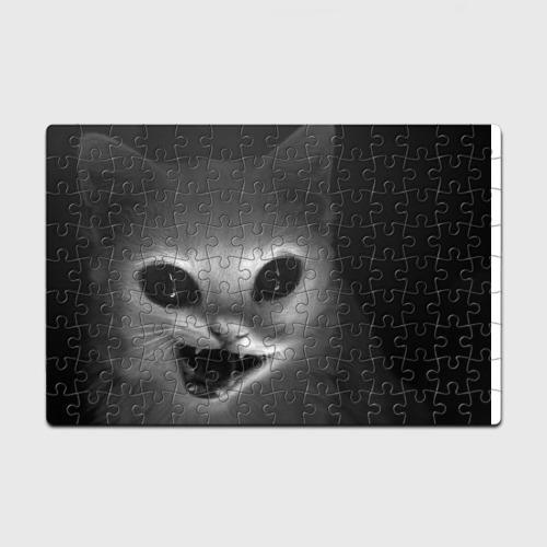 catformouse