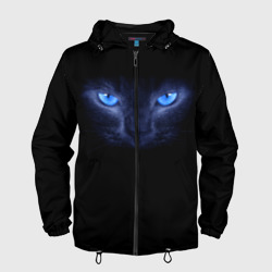 Кошка с голубыми глазами