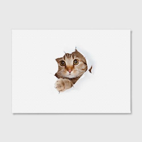 Холст прямоугольный  Фото 02, Котик