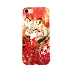 Волк 1