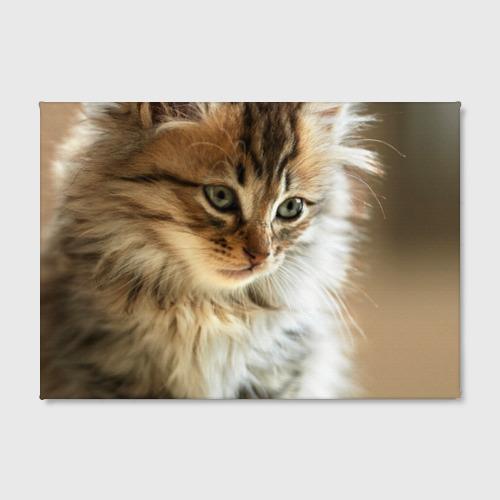 Холст прямоугольный Кот Фото 01