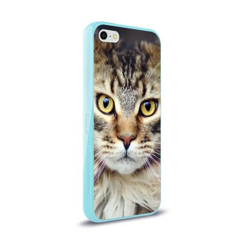 Чехол для Apple iPhone 5/5S силиконовый глянцевый  Фото 02, Кот