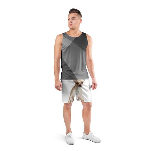 Мужские шорты 3D спортивные  Фото 04, Чихуахуа