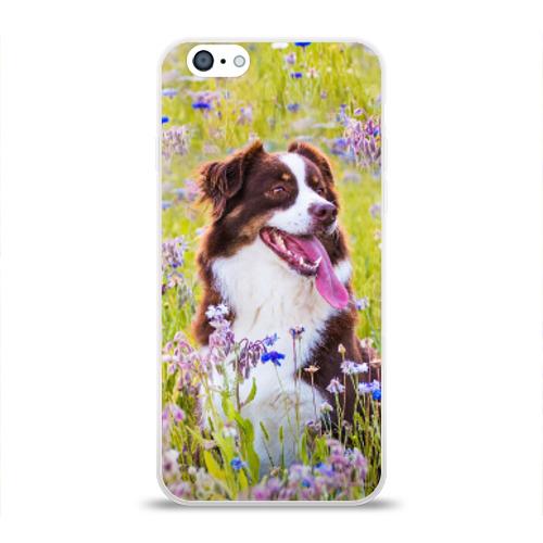 Чехол для Apple iPhone 6 силиконовый глянцевый  Фото 01, Австралийская овчарка