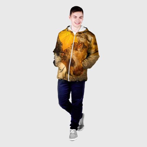Мужская куртка 3D  Фото 03, Австралийская овчарка
