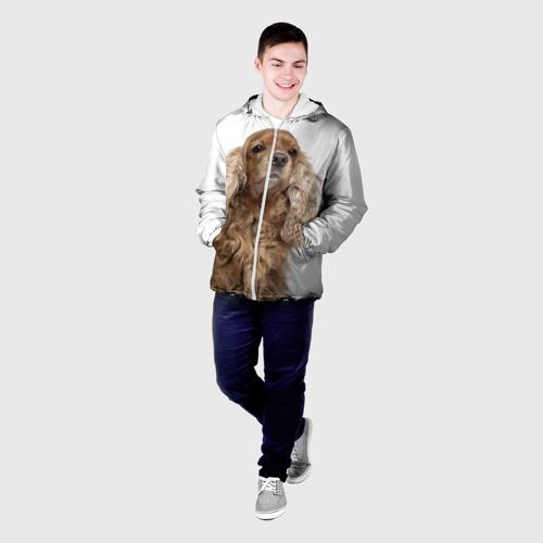 Мужская куртка 3D  Фото 03, Английский кокер-спаниель