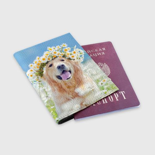 Обложка для паспорта матовая кожа  Фото 03, Золотистый ретривер