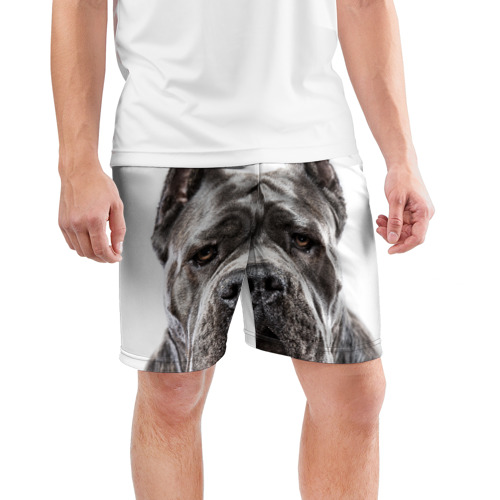 Мужские шорты 3D спортивные  Фото 03, Канне корсо