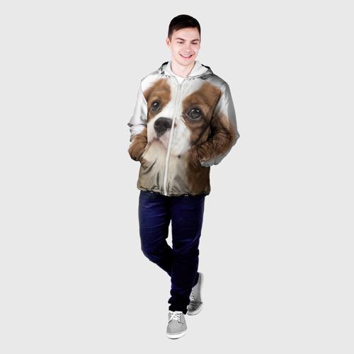 Мужская куртка 3D  Фото 03, Кинг чарльз спаниель
