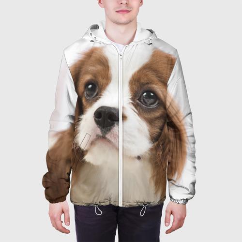 Мужская куртка 3D  Фото 04, Кинг чарльз спаниель