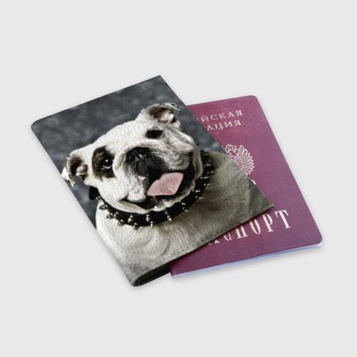 Обложка для паспорта матовая кожа  Фото 03, Английский бульдог
