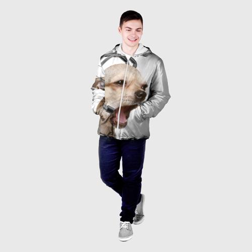Мужская куртка 3D  Фото 03, Чихуахуа