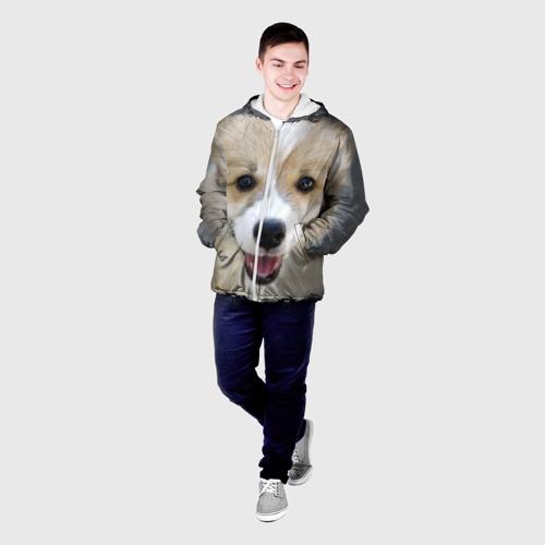 Мужская куртка 3D  Фото 03, Пемброк-вельш-корги, собака, п
