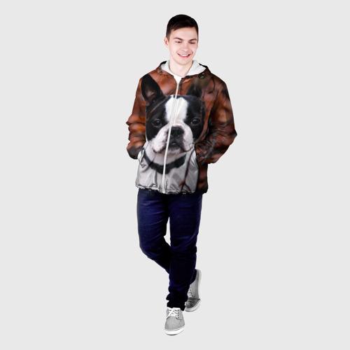 Мужская куртка 3D  Фото 03, Бостон Терьер