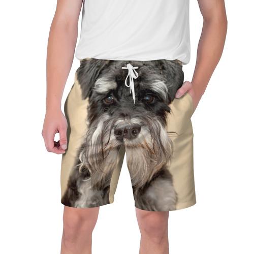 Мужские шорты 3D  Фото 01, Цвергшнауцер