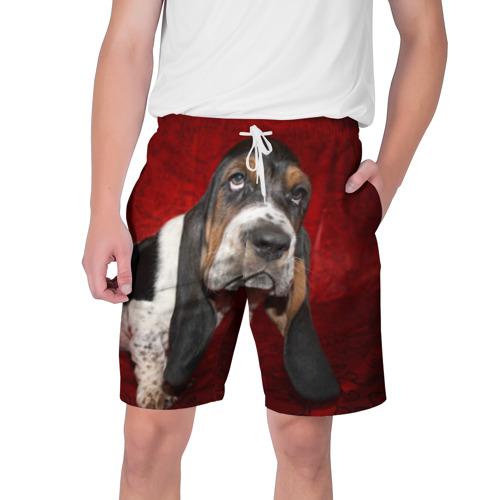 Мужские шорты 3D  Фото 01, Бассет-хаунд