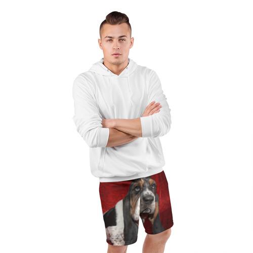 Мужские шорты 3D спортивные  Фото 05, Бассет-хаунд
