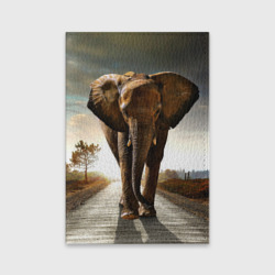 Дикий слон