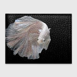 Бойцовая рыбка