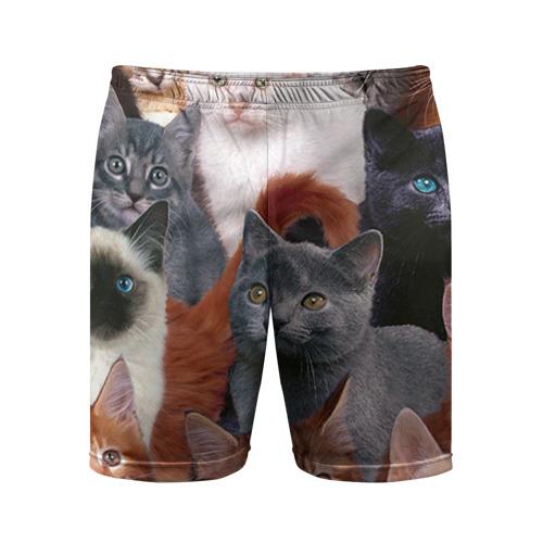Мужские шорты 3D спортивные Коты