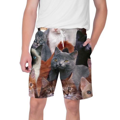 Мужские шорты 3D Коты