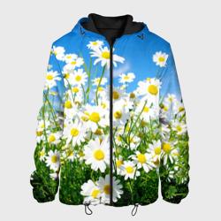 Полевые цветы 7