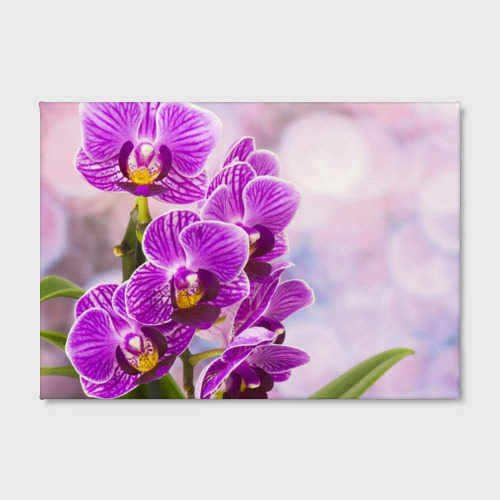 Холст прямоугольный Божественная орхидея Фото 01