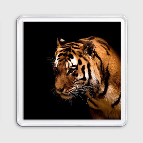 Магнит 55*55  Фото 01, Тигр