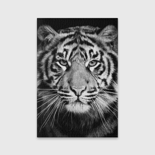 Красавец тигр