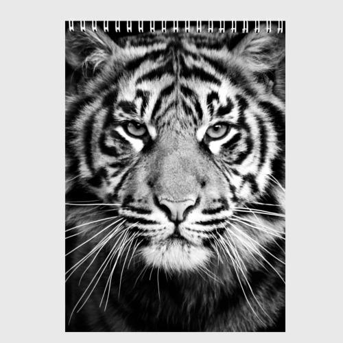 Скетчбук Красавец тигр Фото 01