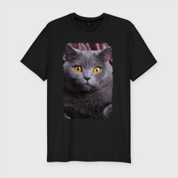 Кот в шоке