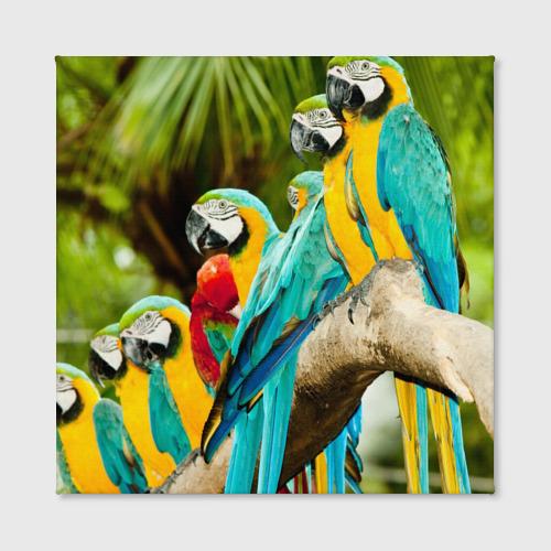 Холст квадратный  Фото 02, Попугаи на ветке