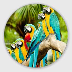 Попугаи на ветке
