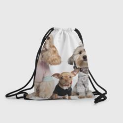 Дивные собачки