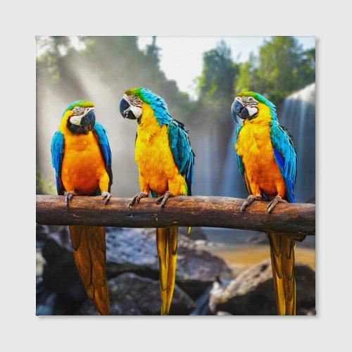Холст квадратный  Фото 02, Экзотические попугаи