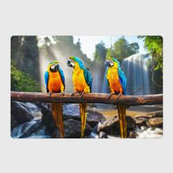 Экзотические попугаи