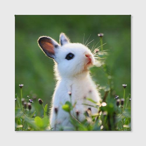 Холст квадратный  Фото 02, Кролик