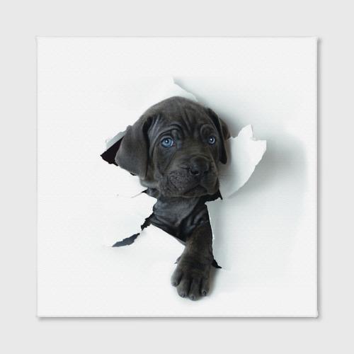 Холст квадратный  Фото 02, щенок Кане Корсо