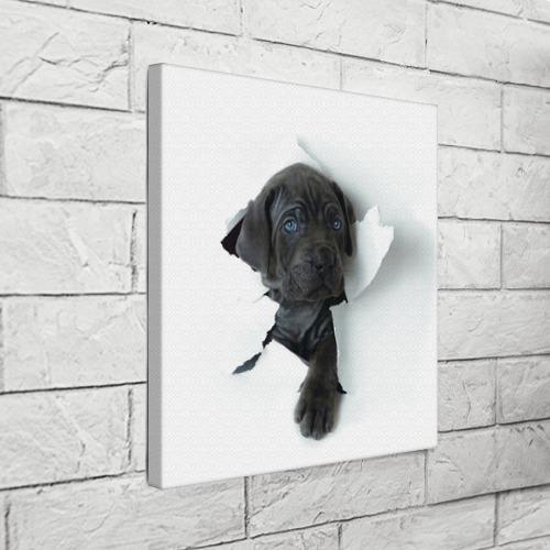 Холст квадратный  Фото 03, щенок Кане Корсо